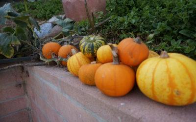 At the shop: DIY Pumpkin Masks for Fall
